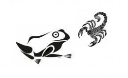 image-grenouille-scorpion-n-